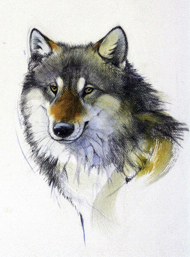 Wolf by Walty Dudok van Heel