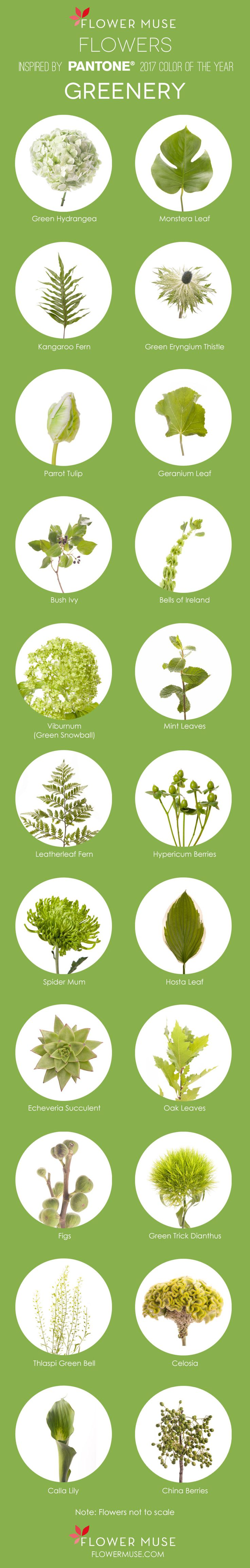 2017 Pantone Color of the Year: Greenery - Flower inspiration on Flower Muse Blog: http://www.flowermuse.com/blog/2017-color-of-the-year-greenery-flower-inspiration/
