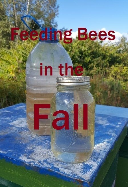 Feeding Bees in the Fall: how to, why, when, etc.