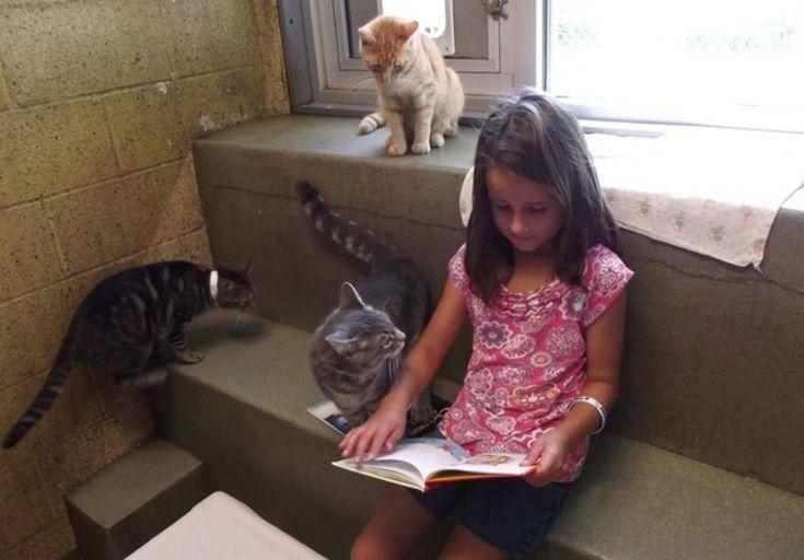 leitura_gatos02_planeta_bicho (Foto: Divulgação/Animal Rescue League of Berks County)