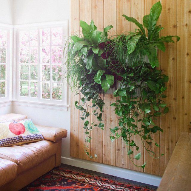 25 best ideas about indoor planters on pinterest indoor plants low light indoor plant lights. Black Bedroom Furniture Sets. Home Design Ideas