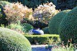 Скумпия кожевенная (Скумпия обыкновенная, Кожевенное дерево, Париковый куст, Дымчатое дерево, Венецианский сумах, Желтинник)