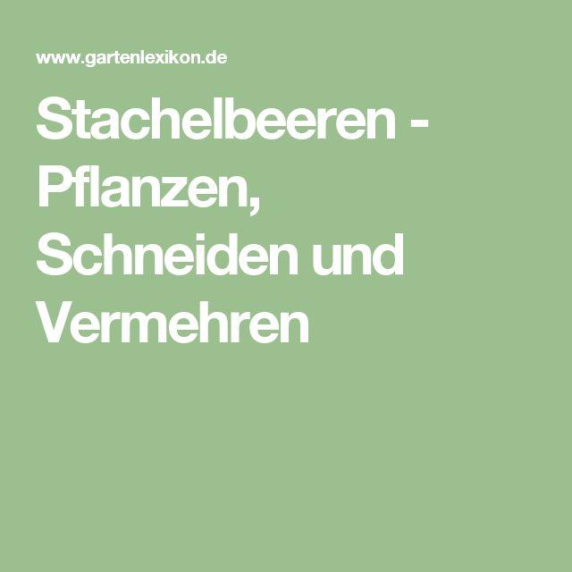 Stachelbeeren - Pflanzen, Schneiden und Vermehren