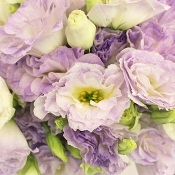 FiftyFlowers.com - Lavender Mist Designer Lisianthus Flower for October to May Delivery