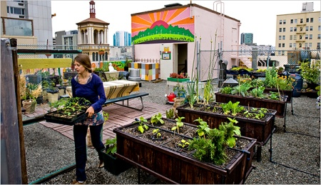 rooftop container gardeningGardens Beds, Rooftops Gardens, Urban Farms, Urban Agriculture, Green Roof, Urban Gardens, Rooftop Gardens, San Francisco, Roof Gardens