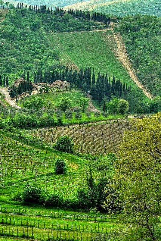 Chianti vineyard in Siena, Tuscany, Italy