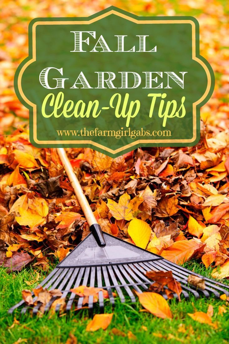 Fall Backyard Cleanup : Fall Gardening CleanUp Tips  Prep your gardens for winter From How