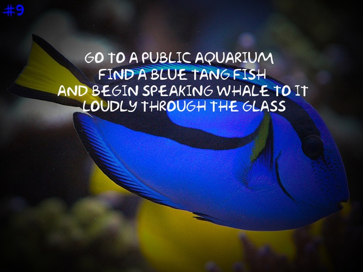 #9 Go to a public aquarium.  Find a Blue Tang fish and begin speaking whale to it loudly through the glass
