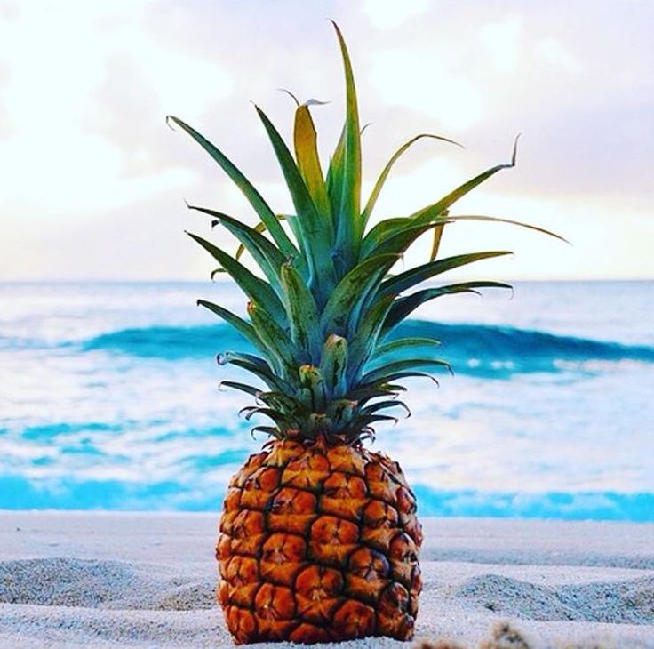 Cute Wallpapers Of Pineapples Pineapple On The Beach Us Sitting Other Wedding Photos