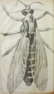 Robert Hooke, Micrographia: or, Some physiological descriptions of minute bodies made by magnifying glasses, 1667.