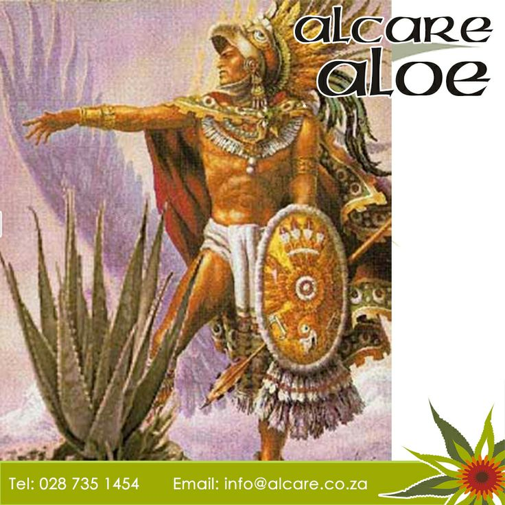 loe in History!! History and legend tell that in 333B.C Aristotle convinced Alexander the Great to conquer the Island of Socotra in order to collect Aloe plants to use as medicine to treat their soldiers of various ailment and wounds.  #aloeinhistory #medecine #Alcare