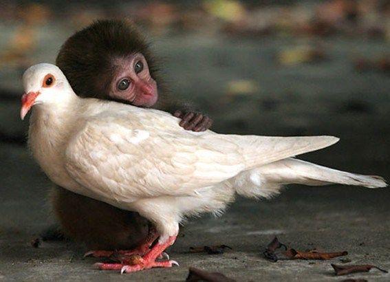 grappige dieren - Google zoeken