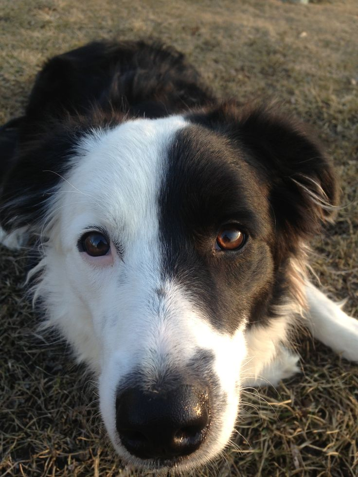 I'm Sophie and I love you. Border Collie Days.