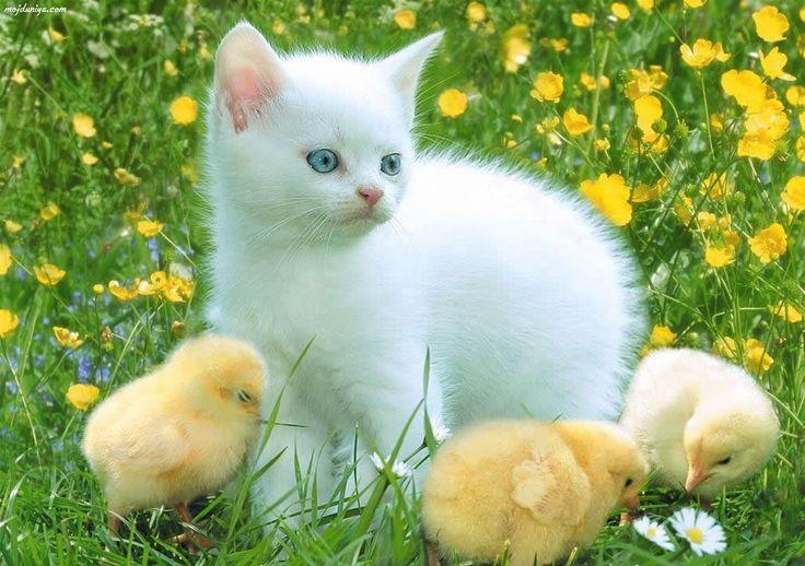 Far too cute!