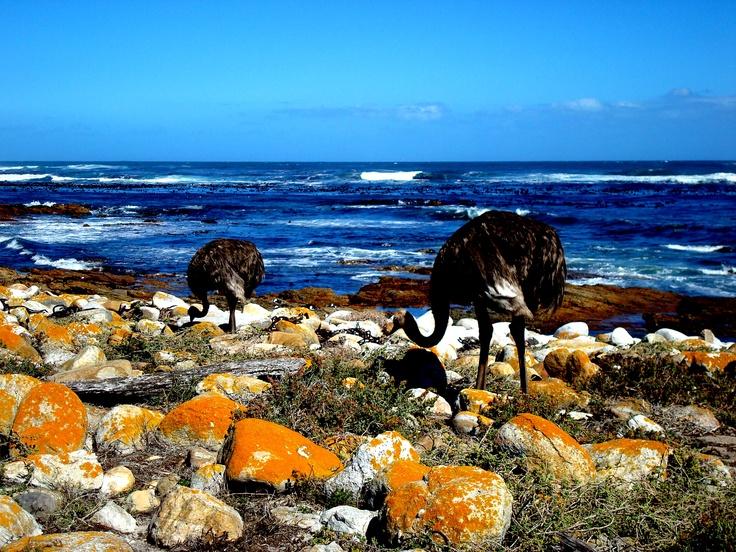 #OSTRICH  #AVESTRUZ #BIRDS
