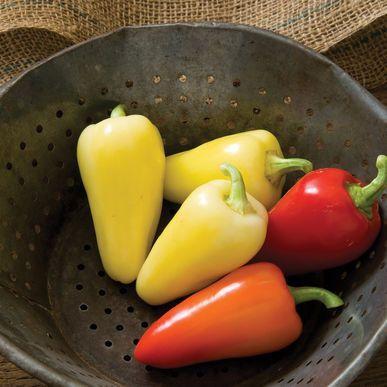 Havasu Pepper Seeds (Capsicum annuum) + FREE Bonus 6 Variety Seed Pack - a $30 Value!