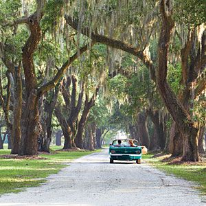 Explore the Carolina Lowcountry, between Savannah and Charleston lies a stretch of land lined with oak trees, South Carolina