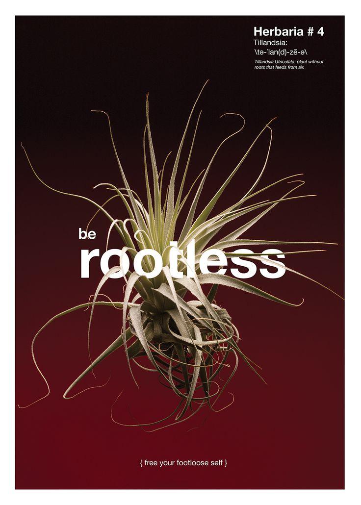 LECCIÓN No. 4 / SIN ATADURAS {VIVE UNA VIDA LIBRE}  Planta: Tillandsia Utriculata. Planta aérea que carece de raíces propiamente dichas; no depende de un sustrato, se alimenta a través de la humedad del aire.