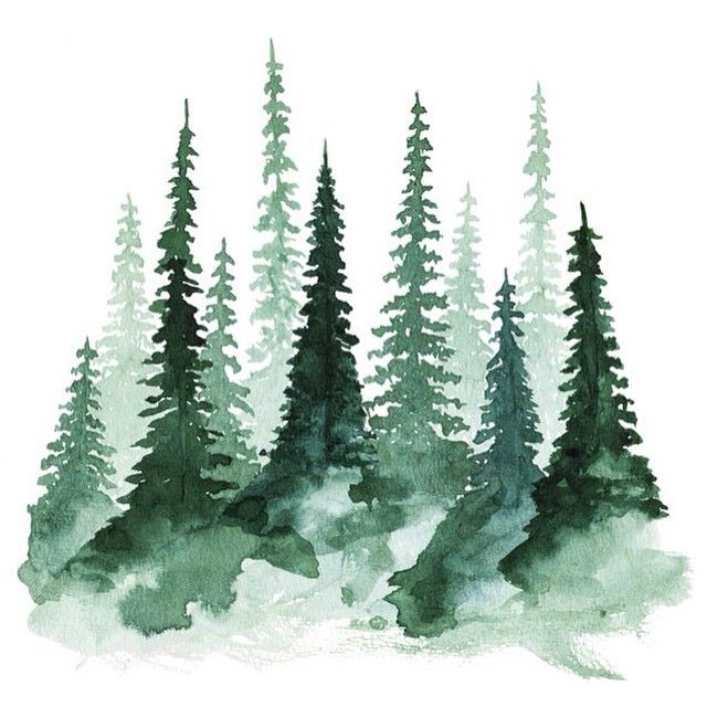 missin' the pacific north west and those tall pines today.