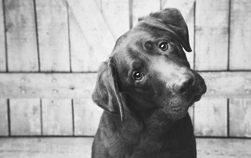 Miért forgatják a fejüket a kutyák?  Aranyos, de vajon mi a tényleges oka?  #kutya #dog #viselkedés #érdekesség #kutyabaráthelyek