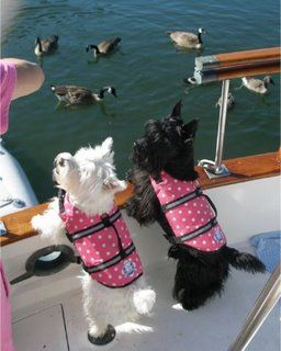 I like this photo, reminds me of the 3 Scotties I once owned