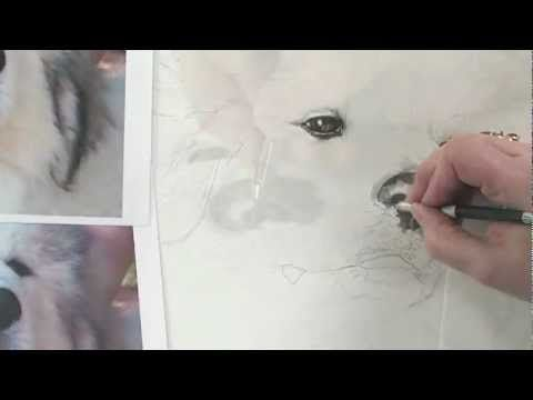 Pet Portrait Drawing Techniques: How to Draw Dogs