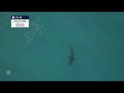 (17) Big Shark in J-BAY 2017 line-up - Mick Fanning's heat again! - WOW! - YouTube