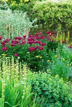 Herbaceous borders in the walled kitchen garden include deep red Paeonia, upright Sisyrinchium striatum, tall yellow Asphodeline lutea and pale yellow Hemerocallis - Day Lilies. Edmondsham House,  Dorset, UK