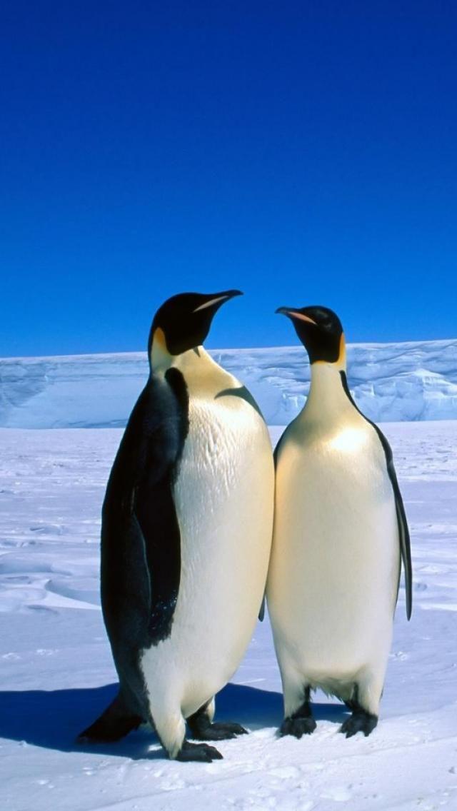 Antarctica, Emperor Penguins - http://www.abercrombiekent.com.au/arctic/
