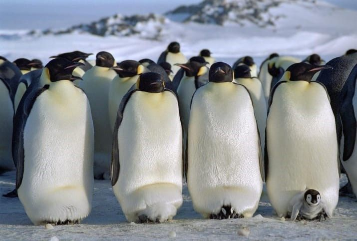 These Hilarious Penguin Memes Will Have You Laughing All Day