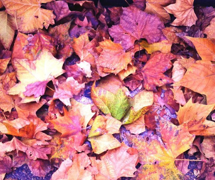#hojas de #otoño Foto iphone 4S, MMM.