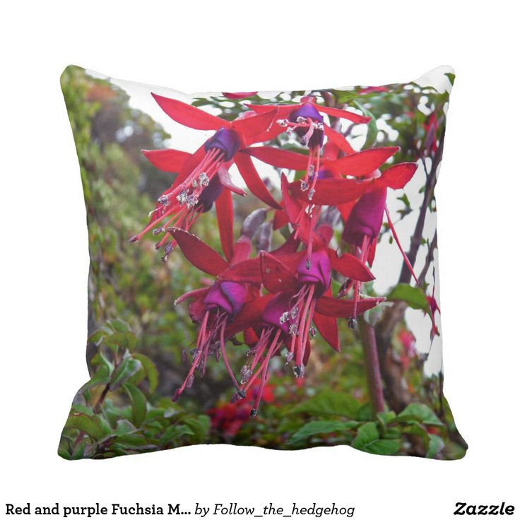 Red and purple Fuchsia Magellanica Throw Pillow Red and purple Fuchsia Magellanica. Hummingbird Fuchsia or Hardy Fuchsia is a species of flowering plant in the Evening Primrose family, native to Patagonia. The picture was taken in Ushuaia, Argentina