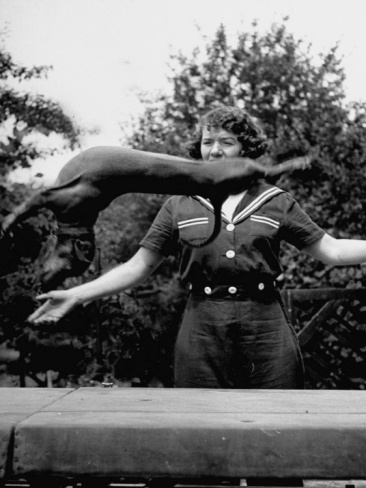 Training a Dachshund