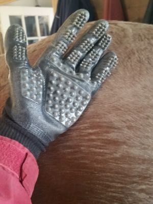 The top gifts to buy for the horse lover in your life!  http://www.proequinegrooms.com/index.php/blog/my-blog/top-twelve-ish-holiday-gift-ideas-for-the-horse-person-in-your-l/