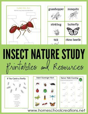 Insecto Naturaleza Estudio Imprimibles de Homeschool creaciones