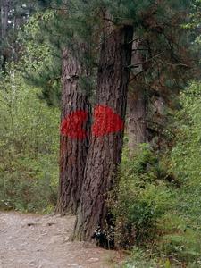 Labios pintados en árboles. El bosque  pintado de Oma nos da la bienvenida con un beso, la muestra más sencilla y pura de afecto.