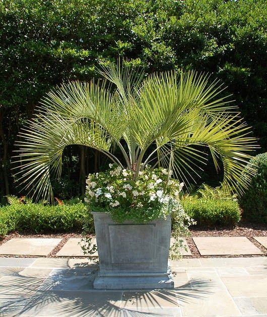 Restoration Hardware Florida: Best 25+ Zinc Planters Ideas On Pinterest