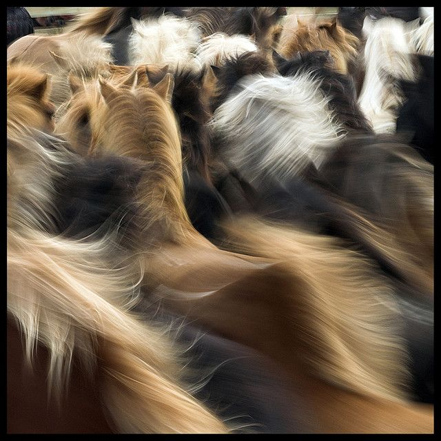 Horses in motion.