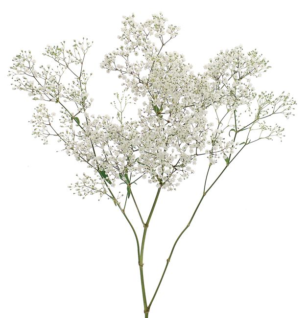 Types Of Flowers For Weddings: Gypsophila Types Of Wedding Flowers