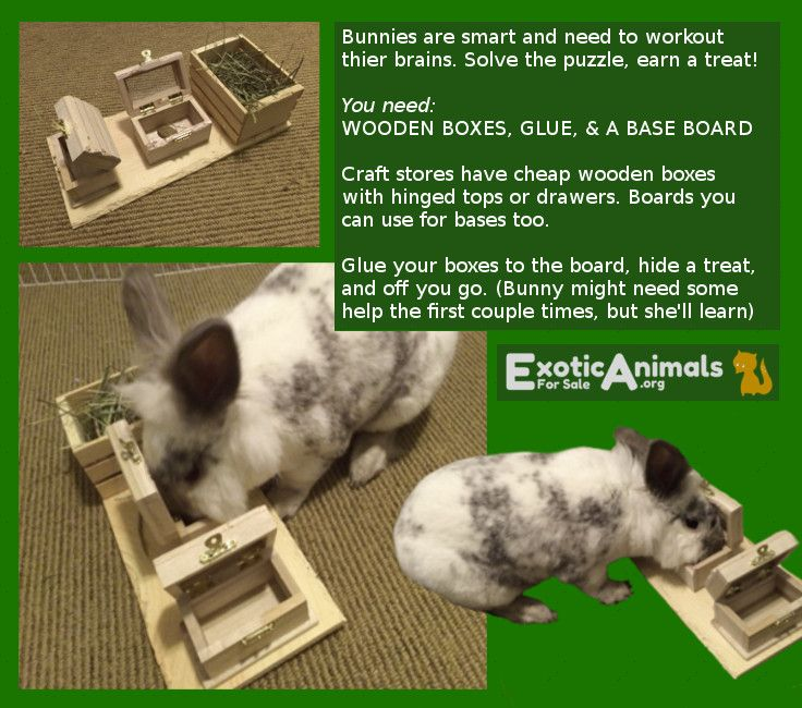 Treat box diy bunny rabbit toys that are cheap and easy for Easy diy rabbit cage budget