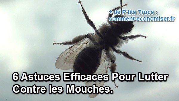 Astuces pour lutter contre les mouches