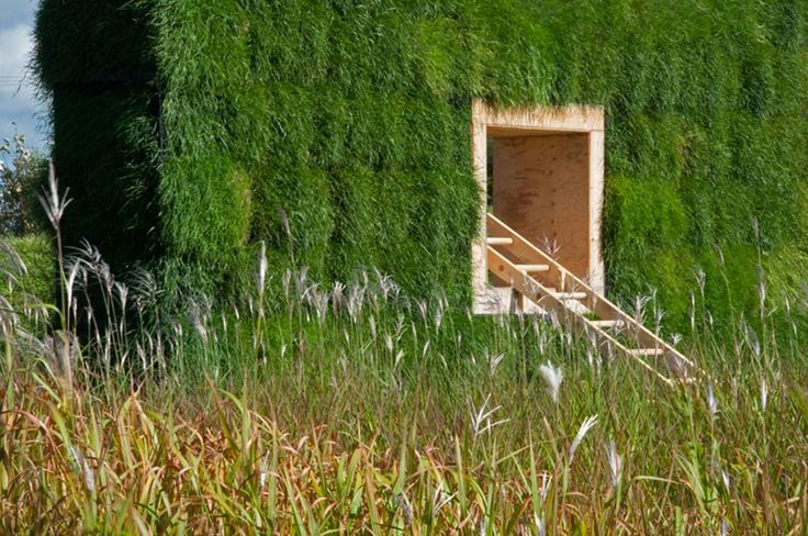 The Grass is Greener (Award- Winning)