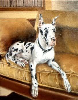Great Dane on golden sofa