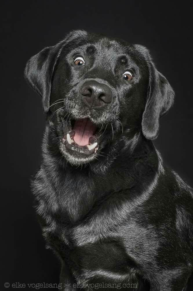 Such a great picture! ❤️ #labradorretriever