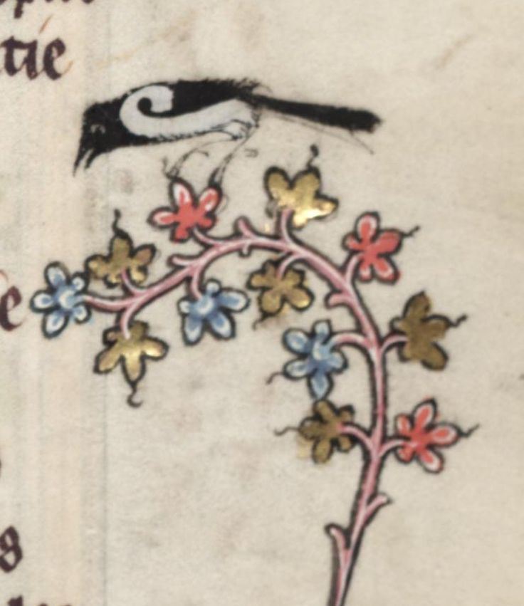 Medieval bird on fłowers . Illuminated manuscript. .