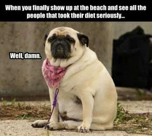415 best things that make me laugh images on Pinterest in