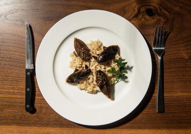 Моя кулинария: Съедобные клопы