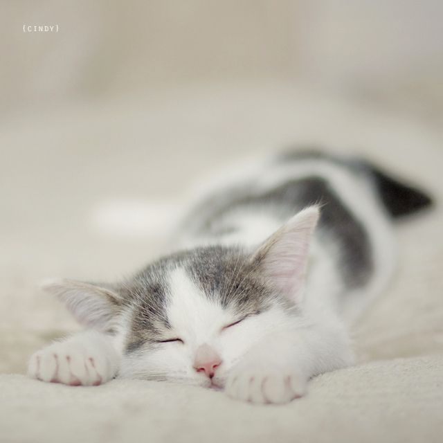 """""""You can't look at a sleeping cat and feel tense."""" --Jane Pauley"""