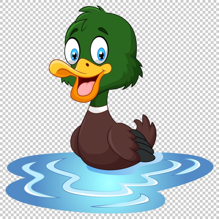 Download Free High Resolution Png Images & Photos Of Duck