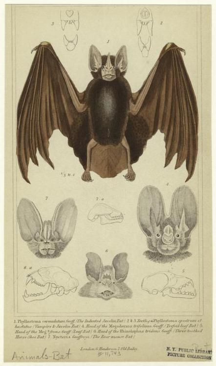 Indented javelin bat